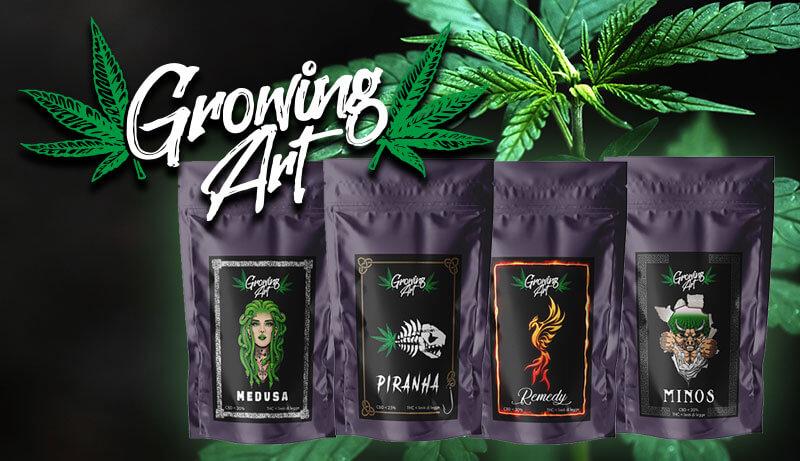 Shop cannabis legale – Infiorescenze canapa light CBD Growing Art - Slider